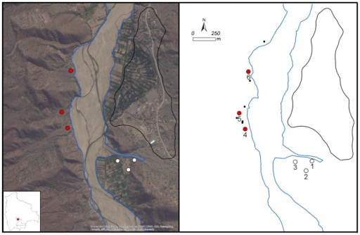 Satellite imagery (∼1 m resolution, ArcGIS, Ver. 10.1, ESRI Inc., Redlands, California, USA [26]) centered on the riverbed of Rio Chico near the town of Zurima (left).Digitized town boundary (black polygon), riverbed (blue lines), six isolated houses (small black dots) and numbered locations of the positive (red fill) and negative (white fill) trap sites.