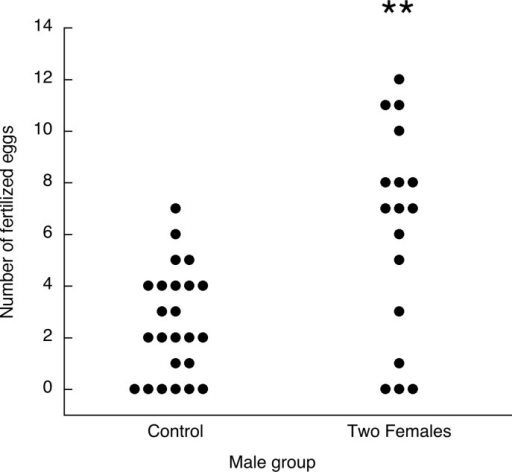 Experiment 4.Fertilization outcomes for males inseminating either two females, one on each of two consecutive days, or one female on one day (control). Each dot is the egg fertilization outcome for one male subject. ** p < 0.005 compared with Control group.