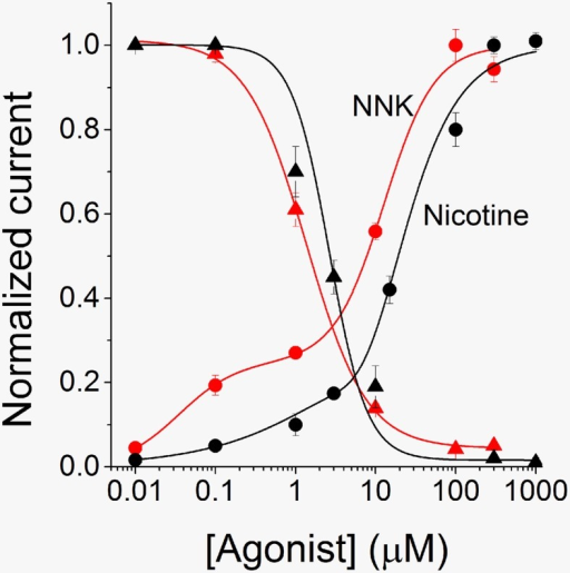 Activation and desensitization profiles for α4β2 nAChRs. The activation curve for NNK (red circles) was generated by using experiments analogous to those shown in Figure 2. The average peak current measured at each concentration of NNK was normalized to the current elicited by 300 μM NNK. Data points are averages of at least seven determinations and were fitted by using Equation 2 (continuous line), which gave EC50high = 0.035 ± 0.012 μM (nH2 = 1.2), and EC50low = 12.81 ± 1.58 μM (nH1 = 1.4). The desensitization curve for NNK was generated by plotting average steady state fractional currents (red triangles), as a function of NNK concentration. At each concentration, the current decay in the presence of the drug was fitted with a single exponential function. The steady state current values thus estimated were divided by the corresponding peak current values. Data points are averages of at least 6 determinations and were fitted by using Equation 3 (continuous line), which gave IC50 = 1.7 μM ± 0.2 (nH = 0.9). The nicotine activation (black circles) and desensitization (black triangles) curves were obtained in a similar way. For activation, data points are averages of at least 6 determinations. They were fitted by using Equation 2 (continuous line), giving EC50high = 0.14 ± 1.03 μM (nH2 = 0.62), and EC50low = 7.7 ± 14.7 μM (nH1 = 1.8). For desensitization, data points were fitted with Equation 3 (continuous line), which gave IC50 = 2.64 ± 0.47 μM (nH = 1.84).