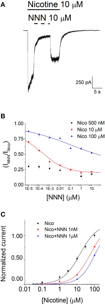 NNN inhibits α4β2 nAChRs. (A) Typical whole-cell current traces elicited by 10 μM nicotine at −80 mV, in the presence and in the absence of 10 μM NNN. Horizontal bars mark time of application of the indicated compound. (B) Steady state inhibition curves were generated by plotting the residual fractional steady state currents as a function of NNN concentration (in Log10 scale). The different data sets were obtained at the indicated concentration of nicotine. Data points are averages of at least nine determinations. Lines through the data points are best fitting curves, obtained with Equation 3. At 100 μM nicotine, IC50 was > 20 μM, whereas at 10 μM nicotine IC50 was 0.21 ± 0.4 nM. (C) Activation curves in the absence (black squares) or in the presence of the indicated concentration of NNN. Data points are peak whole-cell currents normalized to the current elicited by, 100 μM nicotine. Continuous lines through the data points are best fitting curves, obtained with Equation 1. The corresponding parameters were: EC50 = 14.5 ± 1.34 μM (nH = 0.83), for nicotine alone; EC50 = 58.3 ± 4.4 μM (nH = 0.92), in the presence of 1 nM NNN; EC50 = 109.1 ± 0.14 μM (nH = 1), in the presence of 1 μM NNN.