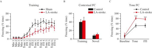 ET-1 in the lateral amygdala (LA) impairs acquisition and retention of tone-conditioned fear memory.A: LA-stroke rats exhibit delayed freezing to a six-trial training protocol as described in Fig. 2A, but comparable freezing levels to the sham group by the end of the training session. A two-way repeated-measures ANOVA revealed a significant treatments × interval interaction, P<0.05, F(1, 132)=2.828 (sham, n=8, LA-stroke, n=8). *P=0.05, Bonferroni post-hoc test, sham vs. LA-stroke. C: Freezing during the training context (P=0.680) and a novel context (P=0.317, two-tailed Student's t-test) is intact in LA-stroke rats. D: Tone conditioning during the four tests block is impaired in LA-stroke rats. A two-way repeated-measures ANOVA revealed a significant treatments × interval interaction, P<0.01, F(1, 42)=0.125 (sham, n=8, LA-stroke, n=8). **P<0.01, Bonferroni post-hoc test, sham vs. LA-stroke.