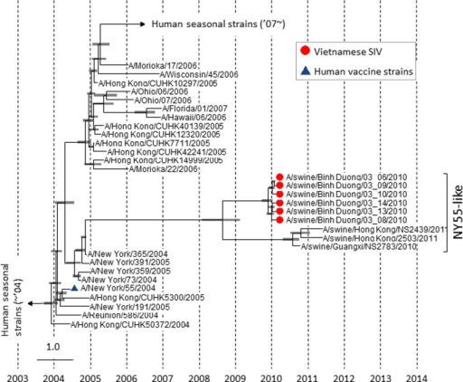 Bayesian Markov chain Monte Carlo phylogenetic tree based on nucleotide sequences of H3HA genes of selected H3N2 viruses. The analysis was performed in Beast package v. 1.7.4(http://beast.bio.ed.ac.uk/) using 164 HA sequences (1701 bp) of H3N2 virusesisolated from 2000 to 2013. Node bars show the estimated divergent period to most recentcommon ancestor (95% highest posterior density).