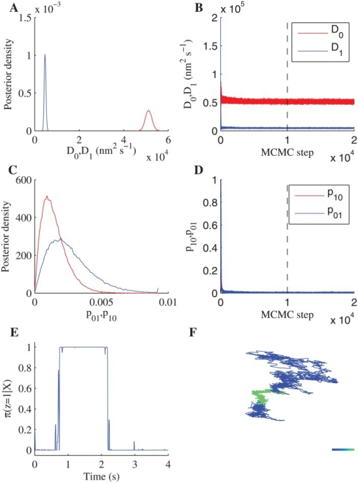 Fit of a two-state diffusion model with measurement noise to an LFA-1 trajectory (PMA+Cal-I treatment).MCMC output (12 independent chains of 20000 MCMC steps with a 10000 step burn-in). (A) The posteriors for the two diffusion coefficients, (B) corresponding samples (12 chains plotted in the same colour) for D0 (red) and D1 (blue) including burn-in (dashed line). (C) Posteriors for the switching probabilities per frame, (D) corresponding samples (12 chains) for p01 (red) and p10 (blue) including burn-in (dashed line). (E) State inference shown as the probability of being in the low diffusion state. (F) Trajectory coloured by the probability of being in the low diffusion state. Colour scale represents π(z = 1∣X) from 0 (blue, high diffusion state) to 1 (green, low diffusion state). Colorbar length: 100nm. Priors, see Methods.