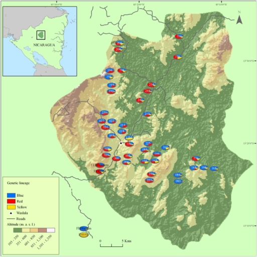 Map of Waslala municipality in central northern Nicaragua.Pie diagrams represent individual smallholder farms and the shares of putative founder genotype spectra, B, R, and Y, totalled over all cacao trees sampled.