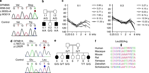 GIPC3 mutations and human deafness.(a) Sequencing chromatograms indicating the guanine (G) and adenine (A) in family W98-042 (top) and control (bottom) at nucleotide position c.903 changing the tryptophan (Trp) residue at position p.301 to a stop codon (p.Trp301X). (b) Shown is the two-generation pedigree of consanguinues family W98-042 with first-cousin parents. Hearing-impaired brothers homozygous for the mutation (II.I and II.3; A/A) are indicated by filled black boxes and normal hearing relatives are indicated by open symbols. (c) Mean pure-tone audiograms of the two affected individuals II.1 and II.3 of family W98-042 at different ages are given in years (y). Note the threshold shifts of 80–120 dB HL above normal hearing levels. (d) Sequence chromatogram showing c.785T>G (p.Leu262Arg) mutation in GIPC3 in individual II-5. (e) Pedigree of the Indian family with prelingual, profound autosomal recessive non-syndromic hearing impairment. The c.785 genotype is shown. Open symbols unaffected; filled black symbols affected; double line consanguineous event. (f) Multi-sequence alignment of GIPC family proteins showing the high conservation of the Leu262 residue.