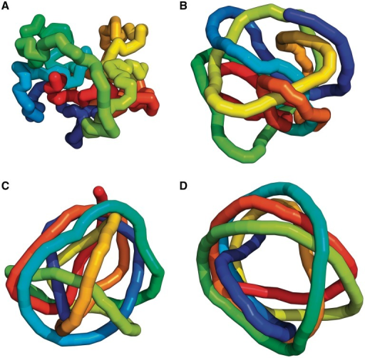 Effect of increasing stiffness on the overall shapes of polymer chains having the same length and being confined within a small sphere of the same diameter. (A) In case of fully flexible chains (B = 0), equilibrated configurations fill the available volume in a rather uniform way. (B), (C) and (D) present representative snapshots of polymer chains with increasing stiffness and having values of the parameter B amounting to 10, 20 and 45, respectively. Notice that as chains get stiffer they progressively adopt spool–like configurations with the centre being unoccupied. Whereas the configuration shown in (A) is unknotted, the remaining configurations are knotted. All snapshots show unanchored chains but anchored chains have very similar overall appearance.