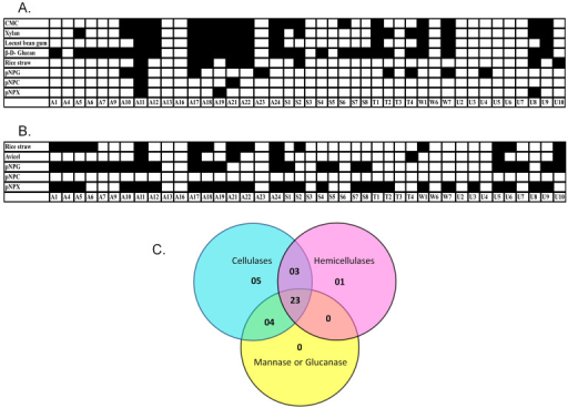Qualitative assessment of hydrolytic enzymes produced by various natural isolates.Enzyme production was tested in the extracellular (A) and cell-bound fractions (B) against amorphous, crystalline and chromogenic substrates. Black and white boxes represent significant and non-significant activities, respectively, in the liquid culture assay. (C) Venn diagram for natural isolates exhibiting cellulase, hemicellulase and other glycosidase activities. Cellulase positive strains were considered to be those that hydrolysed CMC, Avicel, rice straw, pNPC or pNPG. Hemicellulase positive strains were those that hydrolysed xylan or pNPX. Strains that hydrolysed locust bean gum or β-D-glucan were considered to be positive for other glycosyl hydrolases.