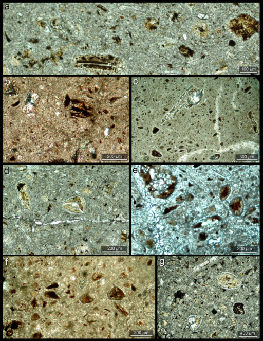 Coprolite thin sections from the Chañares Formation (CRILAR-c 144).(a and b) Woody fragments in the micritic coprofabric of the specimens from Chañares latrines. (c) Leaf fragments and other woody micro-remains in the coprofabric. (d–g) Fossil mosses and ferns-like spores (microspores and megaspores) commonly observed in the coprofabric.