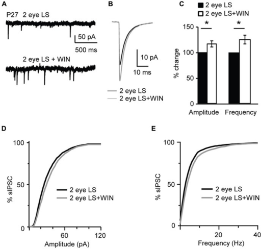 Binocular lid suture delays the window for CB-dependent potentiation of inhibition. (A) Example traces of sIPSCs recordings in Control and after application of WIN (WIN 55,212-2, 1 μM) in animal whose time of eye opening was delayed from P13 to P27 with binocular eyelid suture (2 eye LS). Recording were performed at P27 – a time in development in which sIPSCs from normally reared mice show no sensitivity to WIN. (B) Average sIPSCs traces for the conditions shown in (A). Black: 2 eye LS; gray: 2 eye LS + WIN. (C) Bar plot summarizing the effect of WIN 55,212-2 on average sIPSC amplitude and frequency in binocularly deprived mice. Black: 2 eye LS; white: 2 eye LS + WIN. Data are expressed relative to Control to show fold changes. (D) Cumulative distribution of sIPSC amplitudes for control (2 eye LS) and WIN application (2 eye LS + WIN) in binocularly deprived mice. (E) Cumulative distribution of sIPSC frequencies for control (2 eye LS, black) and WIN application (2 eye LS + WIN, gray) in binocularly deprived mice. Data are presented as mean ± SEM, statistical significance is indicated by * for P < 0.05.