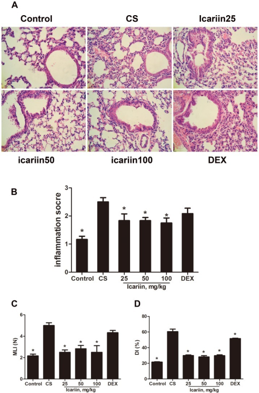 Effects of icariin on lung histopathology.Mice were exposed to CS for 3 months and treated with icariin (25, 50 and 100 mg/kg) or dexamethasone (1 mg/kg). Lung tissue was stained by H&E before being examined. (A) The inflammatory cells of lungs measured by bright microscopy (original magnification,×400). (B) The severity of inflammation was calculated on a 0–3 scale defined as described in Materials and methods. Values of MLI (C) and DI (D) were scored also as described in Materials and methods. Data are mean ± SEM (n = 6). *P<0.05 vs. CS-exposed mice. DEX =  dexamethasone; MLI =  mean linear intercepts; DI =  destructive index.