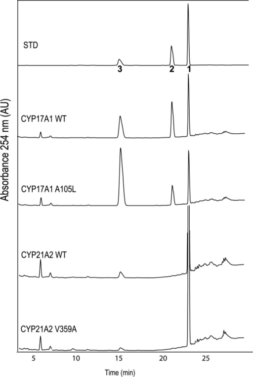 HPLC chromatograms of products derived fromincubations of compound 1 (16,17-dehydroprogesterone)with wild-type CYP17A1, CYP17A1mutation A105L, wild-type CYP21A2, or CYP21A2 mutation V359A and PORin yeast microsomes. Products were identified by retention times ofstandards chromatographed before and after samples: 1, substrate 16,17-dehydroprogesterone; 2, epoxide product16α,17-epoxyprogesterone; 3, 21-hydroxy product21-hydroxy-16,17-dehydroprogesterone. Ordinate scales are 0.05–0.10AU full scale. The integrated UV-detector responses with equal amountsof compounds 2 and 3 were within 30% (notshown); therefore, peak integrals were not corrected to determineproduct ratios.