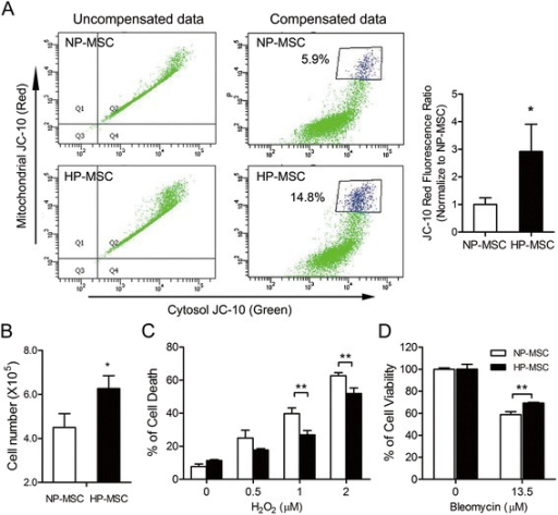 Hypoxic preconditioning promotes cell proliferation and decreases hydrogen peroxide- or belomycin-induced cell death in mesenchymal stem cells. (A) Mesenchymal stem cells (MSCs) were stained with 1 μM JC-10 for 30 minutes, and were then analyzed by flow cytometry. Owing to the dual wavelength emission of JC-10, most stained cells distributed at the double-positive region (top right quadrant). Electronic compensation was made to correct the bleed of the green (monomer) and red (aggregate) fluorescence signals into the FL2 and FL1 channels. Right column shows compensated data. The gated region represented the higher mitochondrial membrane potential cell population. The histogram on the right shows the quantification of three independent normoxia-preconditioned MSCs (NP-MSCs) and hypoxia-preconditioned MSCs (HP-MSCs) samples of JC-10 staining. (B) Cell number of NP-MSCs and HP-MSCs was determined by an automated cell counter. (C) Cell viability of NP-MSCs and HP-MSCs treated with the indicated H2O2 concentration for 1 hour as assessed by flow cytometric analysis with Annexin V/propidium iodide (PI) staining. Percentages of Annexin V/PI-double positive cells (dead cells population) are shown. (D) MTT assays of cell viability of bleomycin-treated mouse lung epithelial cells (MLE-12) in the presence of NP-MSC- or HP-MSC-conditioned medium for 48 hours. *P < 0.05, **P < 0.01, differences between HP-MSCs and the NP-MSC controls.