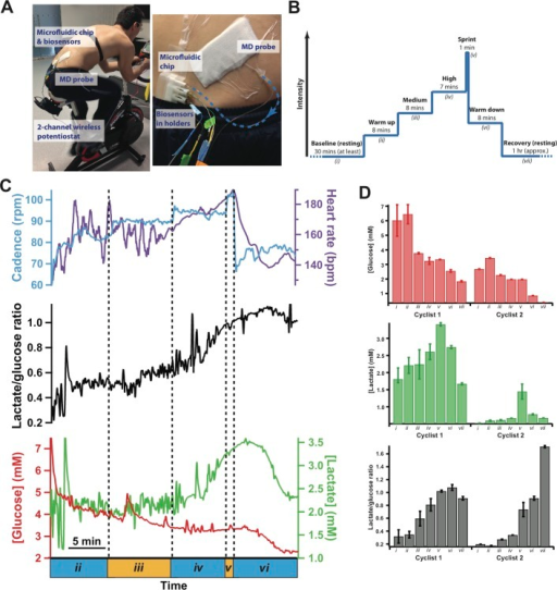 A. Photographof microfluidic device to measure tissue glucoseand lactate levels in dialysate during the cycling protocol. Dialysateflowed into the microfluidic chip, housing the glucose and lactatebiosensors, which were connected to wireless potentiostats, securedonto the bike. B. Experimental protocol. Tissue levels were monitoredduring an initial resting period (i), followed bycycling at 4 levels of increasing rpm (ii-v), a levelof warming down (vi), and a final period of resting(vii). C. Dialysate glucose and lactate levels duringthe exercise phase of the cycling protocol. The bottom graph showsthe glucose (red) and lactate (green) levels, the middle graph (black)shows the lactate/glucose ratio, and the top graph shows the rotationsper minute (blue) and heart rate (purple) throughout the cycling protocol.Glucose and lactate traces have been despiked.39 The dotted lines indicate the stages of varying cyclingintensity: (ii) 55 rpm, (iii) 65rpm, (iv) 75 rpm, (v) sprint, and(vi) 55 rpm. Data has been time-aligned, taking intoaccount the time delay of the system. D. Histograms showing mean dialysatelevels for two different cyclists during key points in cycling protocol.Labels correspond to stages described in the experimental protocol:(i) baseline (ii) midway throughwarm up, (iii) midway through medium intensity, (iv) midway through high intensity, (v) end of sprint, (vi) end of warm down, and (vii) after 50min of recovery.