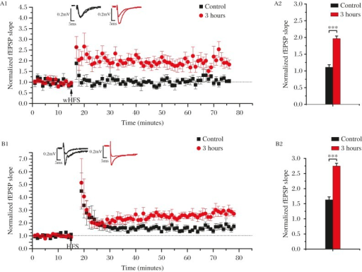 The occurrence of i-LTP in ET-1-induced mini-stroke model.A: Weak high-frequency stimulation (HFS) induced i-LTP at 3 hours after ischemia. When a weak HFS (wHFS, 1 train, consisting of 10 bursts in 100 Hz) was delivered to Schaffer fibers in control slices, no LTP was induced. In contrast, a persistenpotentiation was induced upon stimulation with wHFS in slices obtained from ET-1-treated animals (A2, Control: 1.11±0.04, P<0.001, n = 5 at 61-75 minutes; 3 hours: 1.97±0.08, P<0.001, n = 8). B: HFS faciliates LTP in ET-1-induced stroke model. Compared with normal LTP in control brain slices, LTP in ET-1-treated slices displayed LTP with enhanced potentiation magnitude (B2, Control: 1.63±0.06, P<0.001, n = 5 at 61-75 minutes; 3 hours: 2.75±0.08, P<0.001, n = 5). Data represents mean±SEM. Data represents mean±s.e.m. Statistic differences were compared using independent-sample t-test.