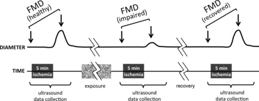 Experimental design for FMD measurement and smoke exposures. FMD was measured by micro‐ultrasound measurements of femoral artery diameter before and after transient (5 minutes) surgical occlusion of the common iliac artery. Anesthetized rats were exposed to SHS for varying durations and FMD was measured 3 times (before exposure, 10 minutes after end of exposure to evaluate impairment, and 30 minutes later to evaluate recovery). As described in the Results section for specific experiments, the smoke exposure was either for 30 minutes or 1 minute, and initial FMD impairment or baseline diameter changes were measured either within 10 minutes or 25 to 30 minutes after the end of exposure. In some cases, FMD recovery was assessed every 30 minutes over a total duration of 90 minutes. FMD indicates flow‐mediated vasodilation; SHS, secondhand smoke.