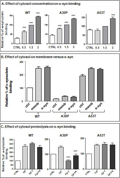 Effect of cytosol on binding α-syn. (A) Recombinant α-syn (Wt, A30P and A53T) were incubated in presence of different concentrations of KO cytosol (0.5, 1.5, and 3 mg/ml), for 10 min at 37°C. Compared to the control condition (without cytosol), all cytosol concentrations had a significant effect on Wt and A30P α-syn binding, but only the highest concentration of cytosol had a significant effect on A53T α-syn binding (One way ANOVA test, p < 0.0001, Bonferroni's multiple comparison post-test). (B) KO synaptic membranes and α-syn were pre-incubated for 15 minutes at room temperature with KO cytosol. Membranes were then centrifuged at 14000 × g and washed with KOAc buffer to remove unbound factors. Binding of purified α-syn to KO membranes in the absence of cytosol (ctrl) was compared to its binding to cytosol-treated membranes without added cytosol (memb), and to cytosol-treated α-syn incubated with KO membranes (α-syn). No significant difference was observed between the two pre-incubated condition (Student T-test, p > 0.05). (C) KO cytosol was pre-incubated with trypsin or proteinase K for 15 min at 37°C. Enzymes were then respectively inactivated with trypsin inhibitor and PMSF for 10 min at room temperature. Compared to the cytosol condition (cyt) which, as a control, was incubated with the enzyme pre-inactivated by the inhibitor, only A30P α-syn binding was significantly affected by the cytosolic protein digestion (Student T-test, p < 0.0001), whereas no significant differences were observed for Wt and A53T proteins (Student T-test, p > 0.05).