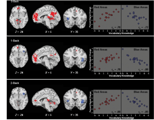 Association between intellectual enrichment and cerebral activity during the N-Back. Statistical maps depict brain regions with significant positive (red) or negative (blue) partial correlations between vocabulary knowledge and BOLD percent signal change, controlling for brain atrophy (P < 0.01; voxel cluster ≥ 500 ml). Scatterplots depict partial correlations between vocabulary knowledge and percent signal change within masked areas of positive (red) and negative (blue) association (P < 0.001). Within scatterplots, percent signal change values (Y-axis) are presented as sample-based z-scores, and vocabulary knowledge (X-axis) is centred at 0. Specific brain regions are listed in Table 2.