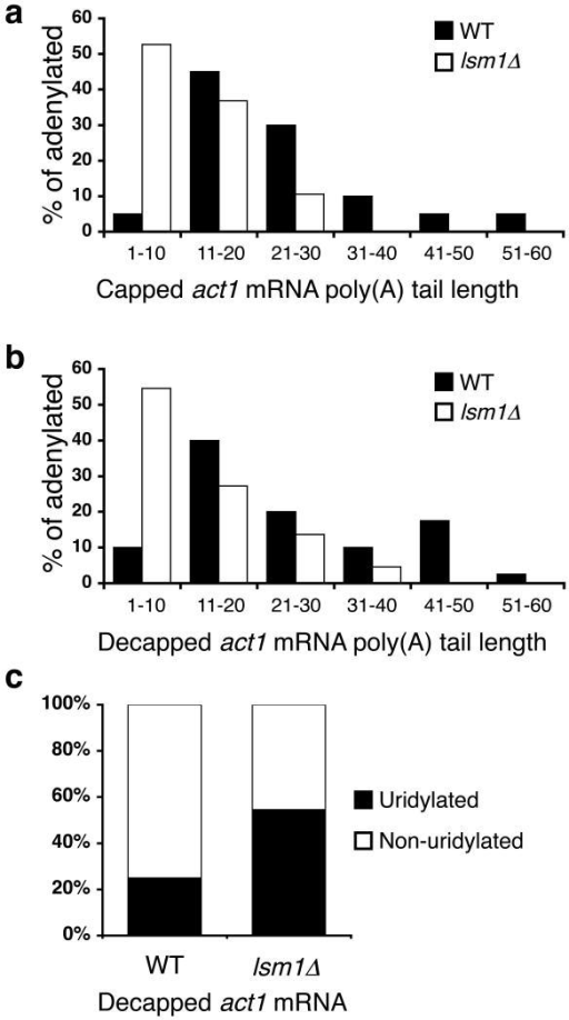 Uridylation-mediated decapping requires Lsm1(a, b) Poly(A) tail lengths, binned into groups of ten nt, of capped (a) and decapped (b) act1 sequences isolated from WT [black; n=20 and 40 respectively] and lsm1∆ [white; n=19 and 22 respectively] cells are compared. (c) The percentage of decapped, adenylated act1 sequences that contain [black] or lack [white] terminal uridyl residues is compared for RNA isolated from WT and lsm1∆ cells.
