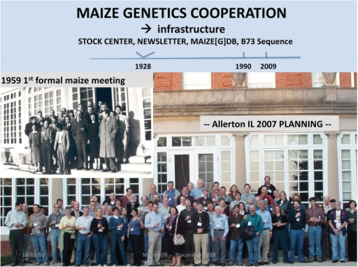 The maize genetics cooperation, 1928–2009. The top timeline depicts the establishment of a Stock Center and Newsletter in 1928, followed by funding for MaizeDB in 1990, and then the 2009 release of the B73 reference genome sequence. The leftmost inset shows the participants of the first formal Maize Genetics Meeting, at Allerton, IL in 1959 [photograph courtesy Earl Patterson and the Newsletter (57)]. The color photograph [courtesy anonymous photographer, and the Newsletter (58) depicts the subset of the current maize research community that convened in 2007, at Allerton, IL to plan infrastructure needs. This 2007 meeting included representatives of MaizeGDB (CJL, MLS, Trent Seigfried).
