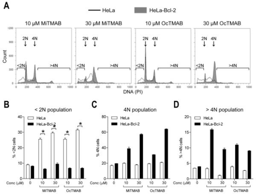 Over-expression of Bcl-2 protects cells from MiTMABs-induced cell death. A-D, G2/M synchronized HeLa (empty histograms) and HeLa-Bcl-2 (filled histograms) cells were synchronized at the G2/M boundary. Once released from this block, cells treated with MiTMAB, OcTMAB or indicated controls, were incubated for 20 h and their DNA contents analysed by flow cytometry. Representative flow cytometry histograms show a decrease in the <2N peak and an increase in the 4N peak in HeLa-Bcl-2 cells treated with MiTMAB (filled histograms) compared to parental HeLa cells (empty histograms; A). Graphs showing the percentage of HeLa and HeLa-Bcl-2 cells (mean ± S.D.) containing <2N (B), 4N (C) and >4N (D) DNA contents are shown. * p < 0.05, ** p < 0.01 (Student's t tests).