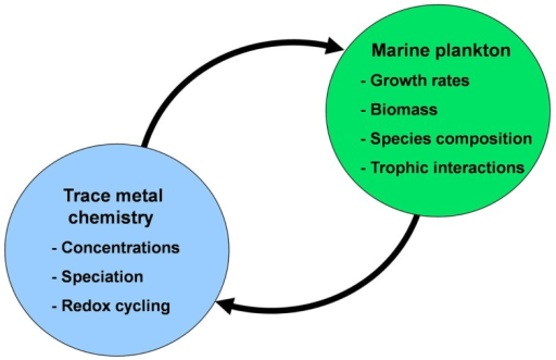 Conceptual diagram of the mutual interactions between trace metal nutrients (Fe, Mn, Zn, Co, Cu, Mo, and Cd) and phytoplankton in the sea. In these interactions the chemistry of trace metal nutrients (their concentrations, chemical speciation, and redox cycling) regulate the productivity, species composition, and trophic interactions of marine phytoplankton communities. These communities in turn regulate the chemistry and cycling of the trace metals through cellular uptake and assimilation, vertical transport of biogenic particles (intact cells and fecal pellets), mediation of metal regeneration processes (by grazers, bacteria, and viruses), production of organic chelators, and biological mediation of metal redox cycling.