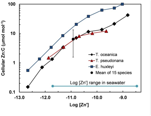 Cellular Zn:C vs log [Zn′] in the oceanic diatom Thalassiosira oceanica, the coastal diatom T. pseudonana, and the oceanic coccoclithophore Emiliania huxleyi in seawater at 20°C based on data from Sunda and Huntsman (1995a). These results are compared with the mean and range (errors bars) of Zn:C measured at the same temperature and a single [Zn′] in 15 different species of marine eukarotic phytoplankton from five major algal groups (Ho et al., 2003). The log [Zn′] range for ocean water is shown based on data of Bruland (1989) (Table 1).