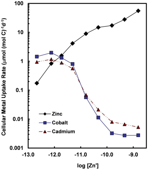Cellular uptake rates for Zn, Co, and Cd (normalized per mol of cell carbon) for the oceanic diatom Thalassiosira oceanica plotted as a function of the log10 of the molar concentration of dissolved inorganic zinc species (Zn′). Concentrations of Cd′ and Co′ were held constant at 2.7 and 1.5 pM, respectively, within the range of values for near-surface ocean water (Bruland, 1992; Saito et al., 2004). Uptake rates for Cd and Co increase by at least two orders of magnitude when Zn′ concentrations decrease below 10−10 M. The large increase in uptake rates reflect the induction of a high-affinity cellular transport system (or systems) for Cd and Co in response to declining intracellular Zn levels or transport of the two metals into the cell by an inducible high-affinity Zn transport system. Data are from Sunda and Huntsman (2000).