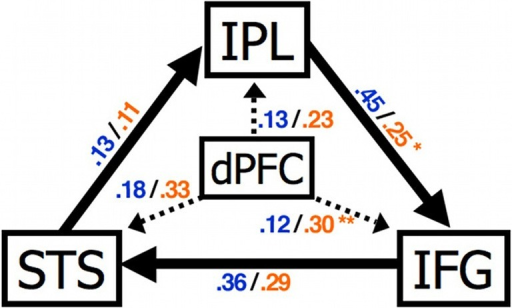 Abnormal connectivity in the brain in ASC. Compared to control participants individuals with ASC showed a significantly increased effect of dPFC on IFG and reduced effect of IPL on IFG. STS, superior temporal sulcus; IPL, inferior parietal lobule; IFG, inferior frontal gyrus; dPFC, dorsal prefrontal cortex. Figure is reproduced, with permission, from Shih et al. (2010).