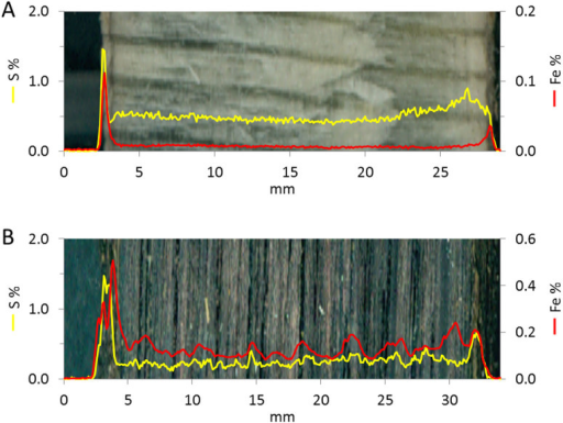 XRF-scans of the Ghost wreck samples 1a (A) & 2a (B).The wood was scanned from the outer surface (left) to the inner subsurface (right) along a line in the middle of each sample. Iron and sulfur show fairly interrelated profiles throughout the wood (note the different concentration scales), except at the inner surface of sample Ghost 1a (A) and 2a (B). A region of broader sulfur peaks appears close to the inner surface (right) of sample Ghost 1a, which should be compared to the much sharper sulfur peak in the outer surface (left in figure A) coated with Beggiatoaspp (also Fig. S1). (B) A repeating pattern of broad iron peaks occurs in Ghost 2a.