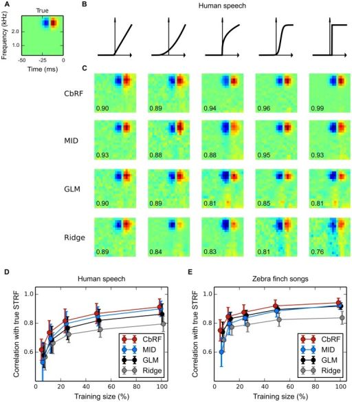 Spectro-temporal receptive field (STRF) estimation from simulated responses to natural stimuli: Robustness to neuronal nonlinearity.(A) Ground truth spectro-temporal linear RF filter used in LNP model simulations of spike responses to four minutes of human speech. (B) Different static nonlinearities utilized in the LNP model, ranging from linear to step-like, the output of which was used for Poisson process spike train generation. (C) Linear RF filter estimates obtained with four estimation methods (rows, explanation cf. Table 1) for each of the nonlinearities in panel B (columns). Numbers indicate correlation of estimated with true RF filter. CbRF and MID methods reliably recovered the true linear filters. The GLM shows a bias when the assumed exponential inverse link function deviates from the static nonlinearity used to generate the data, e.g., for the compressive, sigmoid, and threshold nonlinearities. (D) Average correlation between true and estimated linear filter for speech stimuli of varying length. An ensemble of model cells was created using different linear filters and different nonlinearities from panel B with randomly chosen parameters. Shown are the correlations' mean and standard deviation across 150 model cells for each method. With mean correlation about 0.93 for 100% (four minutes) of the data, CbRF and MID yield higher correlation than GLM and ridge regression. Towards smaller sample sizes, CbRF method performance declines slower than the other methods' including MID's. Bias of the linear ridge regression estimator may be due to the highly non-Gaussian structure of human speech. (E) Same experiment as in D but with conspecific zebra finch vocalization stimuli of total length three minutes. CbRF method resulted in highest mean correlation for all stimuli lengths. GLM and MID method showed similar performance for long stimuli with GLM declining less towards smaller sample sizes below 50%. The somewhat higher mean correlation values observed for ridge regression in comparison to panel D may be attributed to the fact that the zebra finch vocalizations were less non-Gaussian than human speech.
