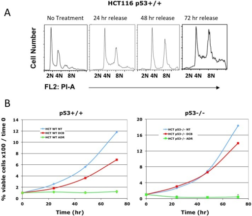 Treatment with DCB does not arrest HCT116 p53+/+ cell proliferation. (A) HCT116 p53+/+ cells were treated with 10 μM DCB for 24 h and then released for the indicated times. The HCT116 cells proceed from tetraploidy to aneuploidy during 72 h of release. (B) HCT116 p53+/+ and HCT116 p53−/− were exposed to 10 μM DCB or 2 μg/ml Adriamycin (Skoufias et al., 2004) for 24 h and then released. Cell counts were then performed at the indicated times. Cells continue to proliferate when tetraploid and aneuploid, regardless of p53 status, but do not recover from Adriamycin.