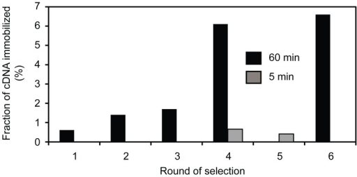 Progress of selection for ligases at 65°C.The fraction of 32P-labelled cDNA that bound to streptavidin agarose after each round of selection is shown. The reaction time was either 60 min or 5 min as indicated by black or gray bars, respectively.