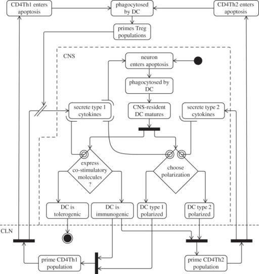 Uml Activity Diagram Depicting The Cellular Interaction Open I