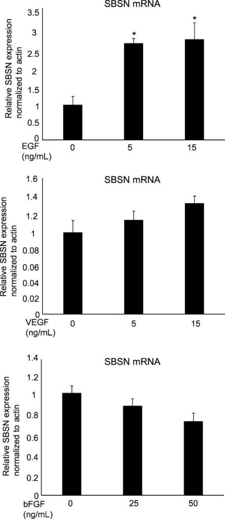 Suprabasin (SBSN) expression after growth factor treatment. NEC were incubated in 0.5% EBM2 medium for 12 h, followed by treatment with endothelial growth factor (EGF), vascular endothelial growth factor (VEGF) and basic fibroblast growth factor (bFGF) for 12 h. The cells were cultured at 37°C in a humidified atmosphere of 5% CO2. *P < 0.05 versus control; two-sided student's t-test. After 12 h of incubation, mRNA was extracted from the cells and used in the RT-PCR analysis of SBSN expression.