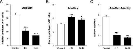 Effect of vitamin B12on methylation index. AdoMet and AdoHcy was measured in cell pellets collected from the adipocytes cultured in customised media, control, LB, and NoB. (A) AdoMet, (B) AdoHcy, and (C) AdoMet-to-AdoHcy ratio. Normalized for cell number and expressed as pmol per 1 × 106 cells. All experiments were performed as triplicates. Values are mean ± SEM. *P ≤ 0.05; **P ≤ 0.01, ***P ≤ 0.001, P value compared to control.