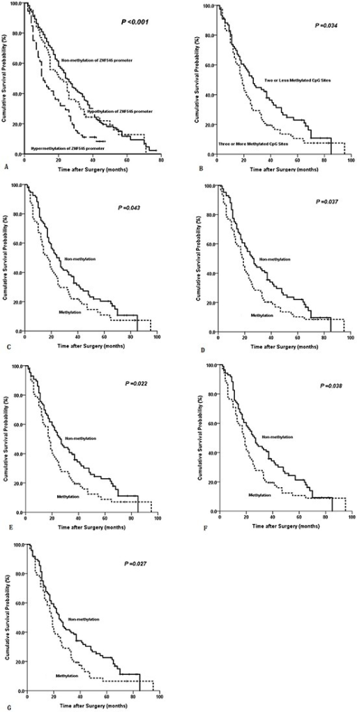 Kaplan-Meier survival curves comparing months of survival in gastric cancer patients are shown for (A) methylated statuses of ZNF545 promoter (MSP), (B) methylated CpG site count of ZNF545 promoter, (C) methylated status of CpG −232, (D) methylated status of CpG −214, (E) methylated status of CpG −176, (F) methylated status of CpG −144, and (G) methylated status of CpG −116.
