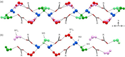HyA hydrogen bonded motifs involving the water molecules and COO– groups. The distinct water sites are coded in differentcolors: W1A, rose; W1B, red; W2, blue; W3, green.Note that only one of the two differently colored W3 orientationscan be occupied as the two positions are related by a 2-fold axisat a proton position. (a) Showing the time-averaged water occupancyand (b) one of many possible instantaneous snapshots of the waterpositions in HyA in the range of occupancies seen in the two crystals.