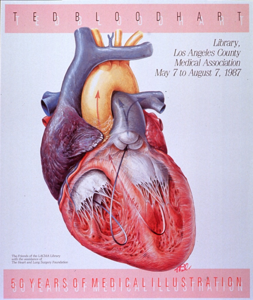 <p>White poster with black, white, and red lettering announcing exhibit, May - Aug. 1987.  Also lists dates, location, and sponsor.  Title divided between top and bottom of poster, on pink bands.  White lettering creates a shadow effect on both.  Central image on poster is a multicolor illustration of a heart, cut away to reveal the interior of the two lower chambers.  Two arrows show the direction of blood flow.  Bloodhart's initials appear below heart.</p>