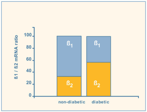 β1/β2 mRNA ratio in diabetic and non-diabetic human atrial appendages.