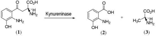Reaction catalysed by kynureninase