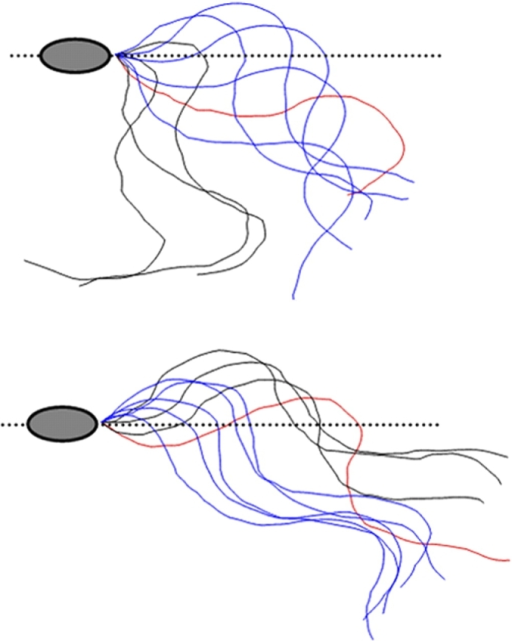 The direction of sperm tail movement (red to black to blue) changes with a sharp pulse of Ca2+ (top).