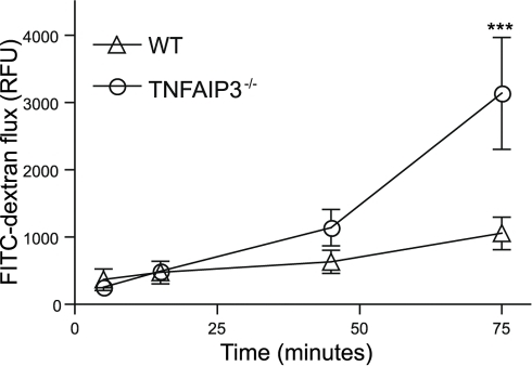 TNFAIP3 is required to maintain intestinal barrier function.Explanted intestinal loops from untreated wild type (WT; triangles) and TNFAIP3 deficient mice (TNFAIP3−/−; circles) were examined for loss of barrier function. The flux of FITC-dextran over time out of the loops was measured in relative fluorescent units (RFU) per cm of intestinal tissue. Increased FITC-dextran flux indicates decreased barrier function. (***p<0.001)
