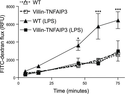 Intestinal epithelial cell-specific expression of TNFAIP3 protects against LPS-induced loss of barrier function.Explanted intestinal loops from WT (triangles) or villin-TNFAIP3 transgenic mice (squares) were assayed for barrier function beginning 45 minutes after injection of LPS (0.1 mg/mouse, ∼5 mg/kg i.p.; filled symbols) or in untreated animals (open symbols). The flux of FITC-dextran over time out of the loops was measured in relative fluorescent units (RFU) per cm of intestinal tissue. Increased FITC-dextran flux indicates decreased barrier function. (*p<0.05, ***p<0.001; WT untreated vs. WT LPS treated).
