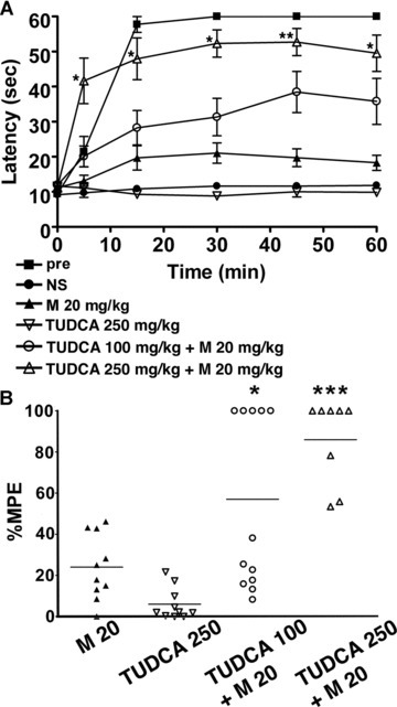 A chemical chaperone attenuates the development of morphine tolerance. Wild-type mice were injected intraperitoneally with TUDCA together with 20 mg/kg morphine twice a day for 5 days, and the hot plate test was performed to evaluate analgesia at the tenth injection on day 5. (A) The graph represents the response latencies (0–60 sec.) of the mice with saline control (NS, N= 10), morphine alone (M, N= 10), 250 mg/kg TUDCA alone (N= 10), 100 mg/kg TUDCA and morphine (N= 12), 250 mg/kg TUDCA and morphine (N= 8). 'Pre' represents control mice evaluated by the hot plate test after the first morphine injection on day 1 (N= 10). The response latencies of the mice receiving both TUDCA (250 mg/kg) and morphine were significantly longer than those of control mice with morphine alone after the tenth treatment. *P < 0.05, **P < 0.01, two-way ANOVA with the Bonferroni post hoc test. (B) The graph represents the distribution of percentage MPE after the treatment of wild-type mice with morphine alone (N= 10), 250 mg/kg TUDCA alone (N= 10), 100 mg/kg TUDCA and morphine (N= 12), 250 mg/kg TUDCA and morphine (N= 8). The mean percentage MPE of mice treated with TUDCA and morphine was significantly larger than that of the mice treated with morphine alone. *P < 0.05, ***P < 0.001, one-way ANOVA with the Bonferroni post hoc test.