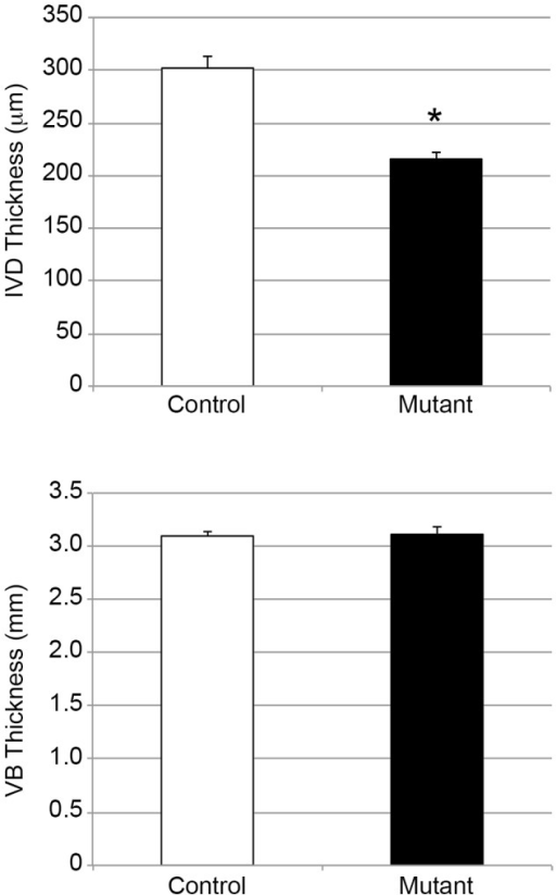 Quantitative analysis of IVD thickness assessed by X rays at 2 months.Measurements of IVD and VB thicknesses of control (white bars) and mutant (black bars) mice at 2 months. Statistical analysis was performed using the Student's t test. Differences with a p-value <0.05 were considered as statistically significant.