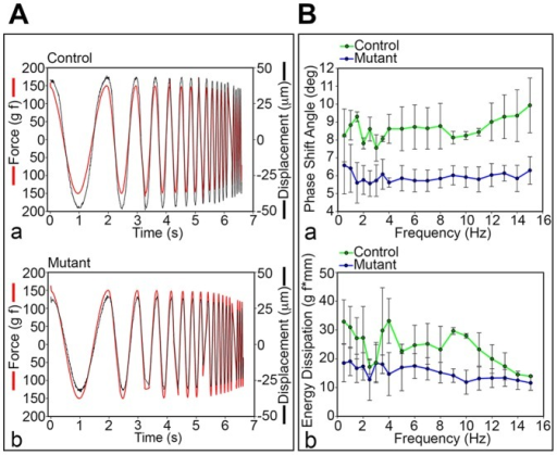 Altered biomechanical properties of the mutant IVD lacking the NP.A. Load damping capacity in control (HIF-1αf/f) (a) and mutant (Foxa2iCre;HIF-1αf/f) (b) IVD at 4 months. B. Phase shift angle (a) and energy dissipation (b) based on the load damping test in control (HIF-1αf/f) and mutant (Foxa2iCre;HIF-1αf/f) IVD at 4 months. Statistical analysis performed between control and mutant groups: rmANOVA p<0.001 (a) and p<0.05 (b).