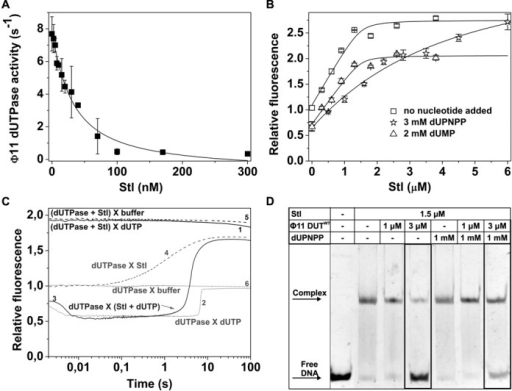 dUTPase:Stl complex formation eliminates the physiological function of both proteins. (A) Inhibitory effect of Stl on Φ11DUTWT (10 nM) catalytic activity. Data represent average and error of three parallel measurements. Solid line represents fit of quadratic binding equation to the data, yielding IC50 26.64 ± 5.07 nM. (B) Shows titration of Φ11DUTF164W (1.5 μM) and Φ11DUTF164W (1.5 μM): dUPNPP (3 mM)/dUMP (2 mM) complex with Stl. Error bars represents SD for n = 3. Solid lines represent quadratic fits to the data (see Equation (1)). Dissociation constants from the fitted model are shown in Table 1. (C) Shows transient kinetic investigation of the mixing order dependency of Stl inhibition. 2 μM d Φ11DUTF164W, 3 μM Stl and 50 μM dUTP was mixed (post-mixing concentrations: X indicates the mixing of species in syringe A and B (syringe A X syringe B), parenthesis indicates that the components were pre-mixed. The curves are shown from 0.002 s (after the dead time). (D) Effect of dUPNPP on dUTPase derepression activity characterized by EMSA.