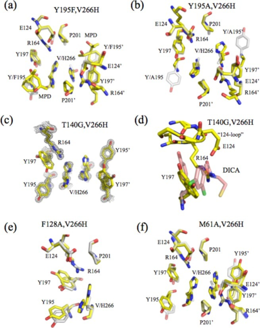 Structures of restorativemutants. Dimer interface of (a) Y195F/V266H,(b) Y195A/V266H, (c and d) T140G/V266H, (e) F128A/V266H, and (f) M61A/V266H.For panels a–f, amino acids are colored yellow for the mutantand gray for WT caspase-3. In panel c, electron density is shown byblack mesh. In panel d, the position of Y197 is compared to that ofcaspase-7 with an allosteric inhibitor, DICA, bound (pink, PDB entry 1SHJ).