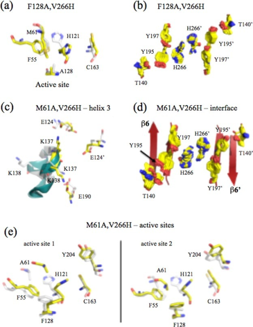 Moleculardynamics simulations of active site restorative mutants.MD simulations of (a and b) F128A/V266H and (c and d) M61A/V266H.(a) Comparison of active site residues for F128A/V266H at time zero(gray) and 18 ns (yellow) demonstrates movement of H121 toward C163.(b) Two hundred frames (at 250 ps intervals) of the 50 ns simulationfor F128A/V266H demonstrate movements of the amino acids in the dimerinterface. (c) The position of helix 3 is shown at time zero (gray)and 50 ns (yellow) for M61A/V266H. (d) Two hundred frames (at 250ps intervals) of the 50 ns simulation for M61A/V266H demonstrate movementsof the amino acids in the dimer interface. (e) Comparison of activesites of M61A/V266H at time zero (gray) and 50 ns (yellow) demonstratemovement of H121 toward C163.