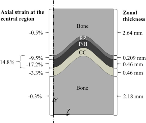 Different levels of axial strain were experienced by different zones (layers) of the sample.Although a compressive displacement equal to 20% of the growth plate thickness was applied to the top surface of the whole sample, the combined reserve zone and proliferative/hypertrophic (P/H) layers were subjected to engineering strains of only about 15%. Strains in the calcified cartilage (CC) zone reached about 3% strain.
